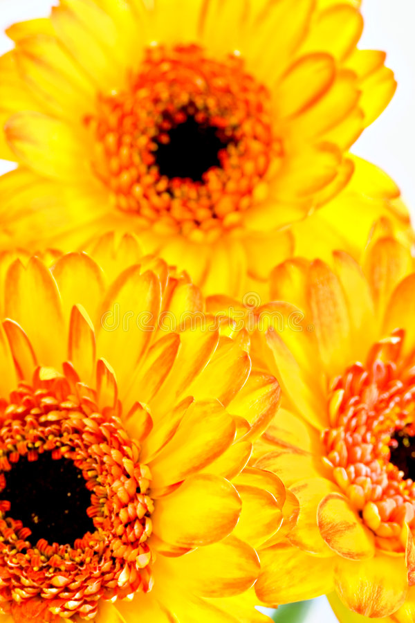 Download Big yellow flowers stock photo. Image of flower, color - 8088694