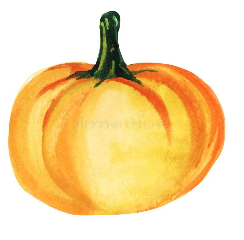 Big yellow pumpkin. Ripe orange pumpkin. Illustration template. Watercolor pumpkin background. Hand drawn watercolor. Illustration stock photos