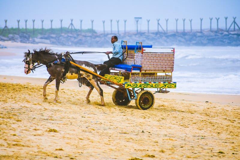 Biga del cavallo sulla riva immagini stock libere da diritti