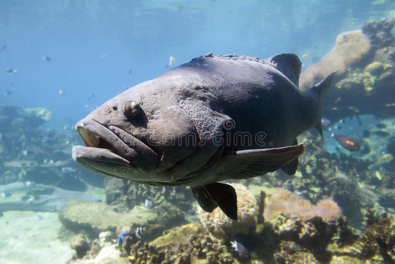 Bigfish royalty-vrije stock afbeelding