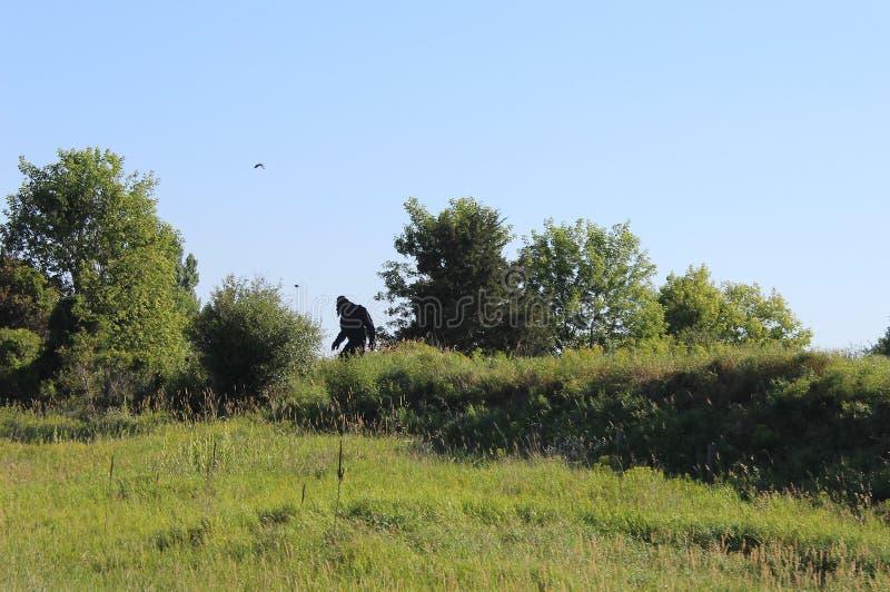 Bigfoot que corre lejos de la cámara imágenes de archivo libres de regalías