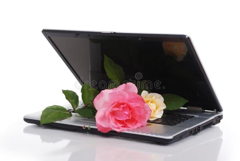 Biglietto di S. Valentino rosso Rosa immagine stock libera da diritti