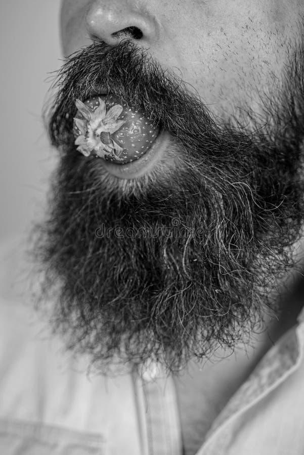 Bigote rodeado boca masculina de la barba de la baya Fresa masculina del intento de la barba de la cara Placer gastronómico El ho fotos de archivo