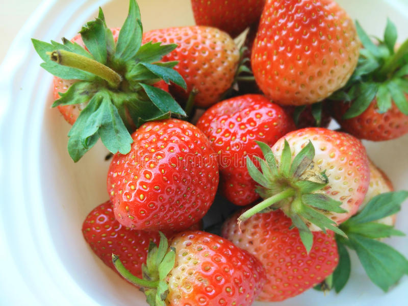 Bigsize-Erdbeere stockfotos