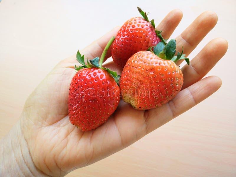 Bigsize-Erdbeere in der Hand lizenzfreies stockfoto