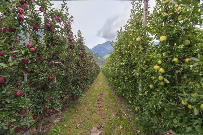Bij de appelaanplanting royalty-vrije stock afbeelding