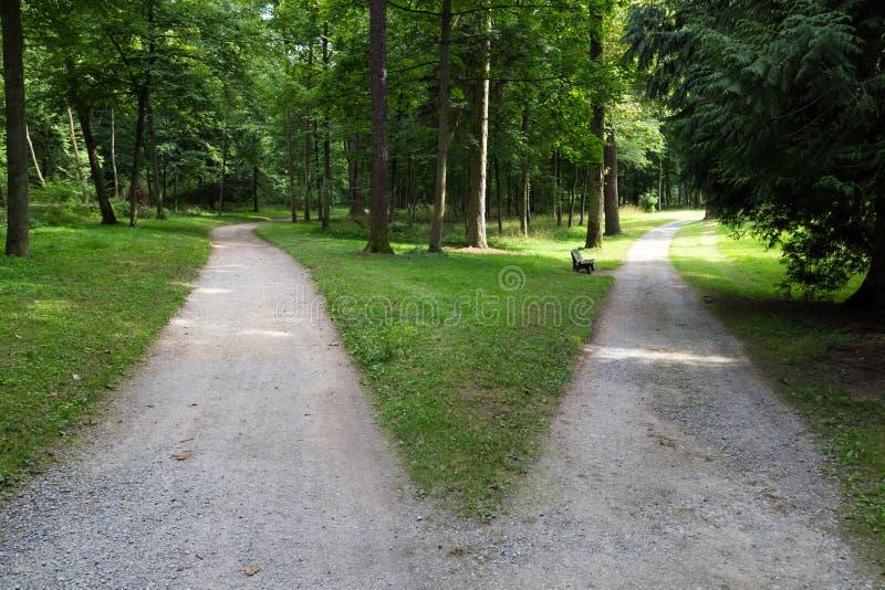 Bij de vork: twee wegen in het bos stock afbeelding