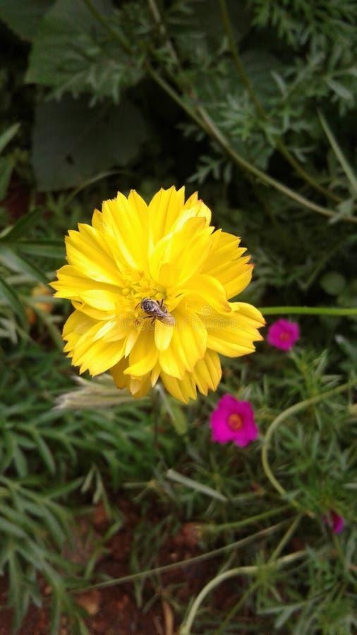 Bij in een bloem royalty-vrije stock afbeeldingen