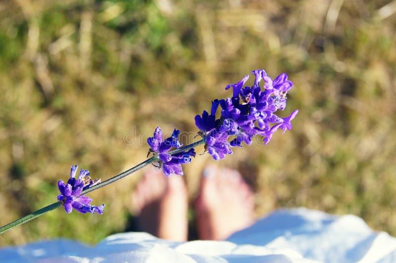 Bij het lavendelgebied royalty-vrije stock afbeelding