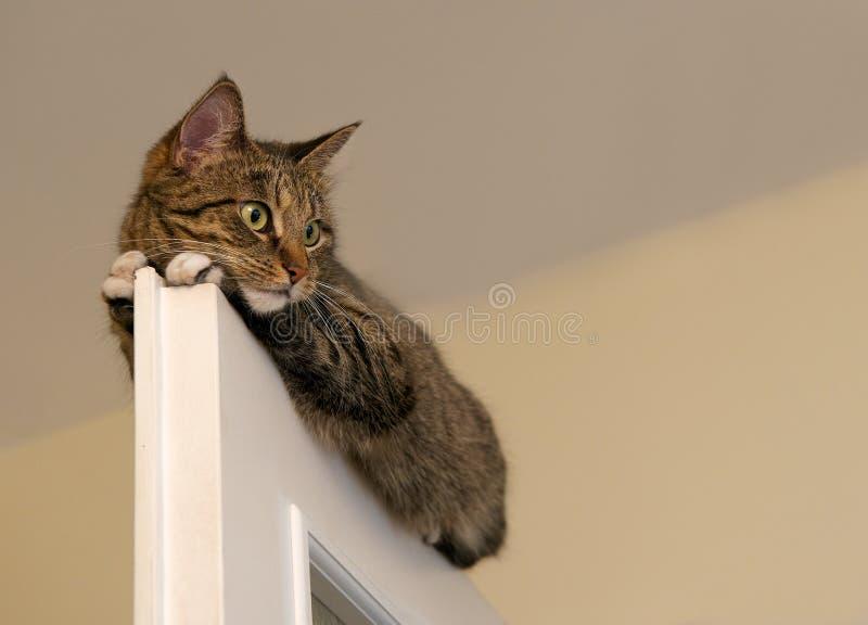 Bij, het rusten kat op de bovenkant van deur op onduidelijk beeld lichte achtergrond, leuke grappige kat dicht omhoog, kleine slap royalty-vrije stock afbeelding