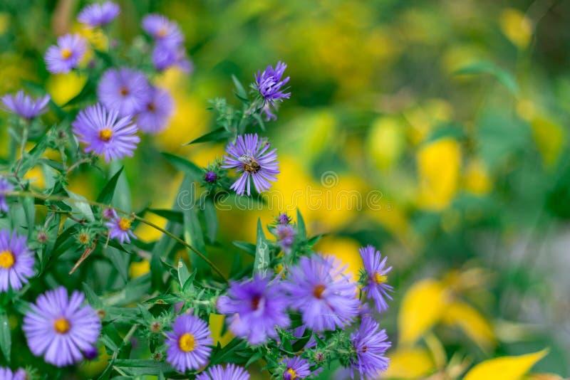 Bij het voeden op de kleuren van de het bloemblaadjeherfst van de bloesembloem stock foto's
