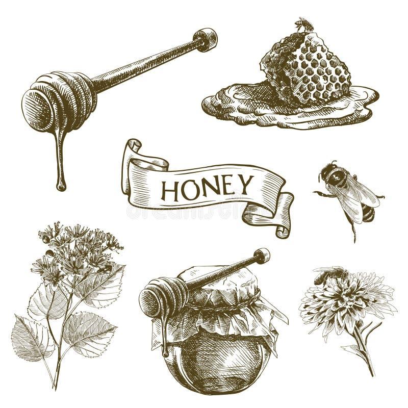 Bij Honing Honingraat vector illustratie