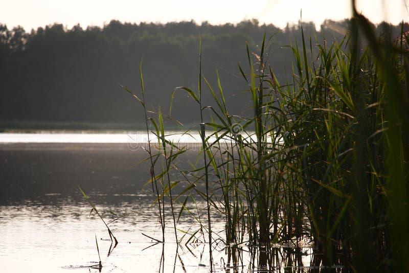 Bij kust in de ochtend royalty-vrije stock afbeelding