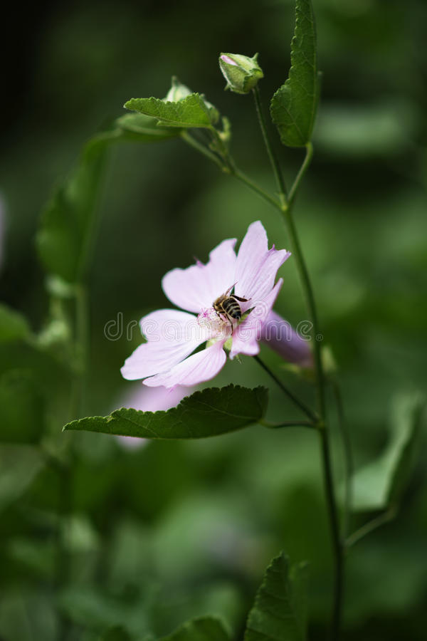 Bij op bloem royalty-vrije stock fotografie