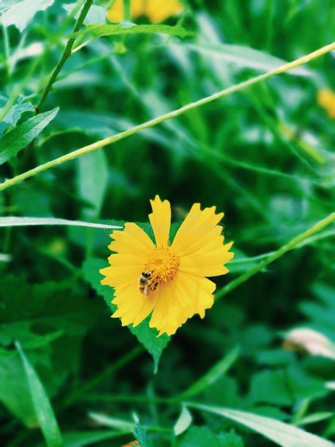 Bij op een bloem stock afbeelding