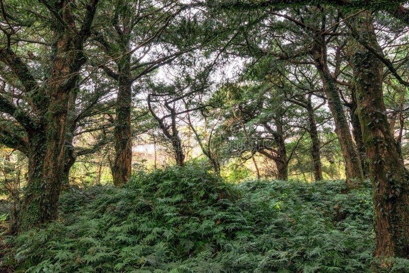 Bijarim boslandschap stock foto