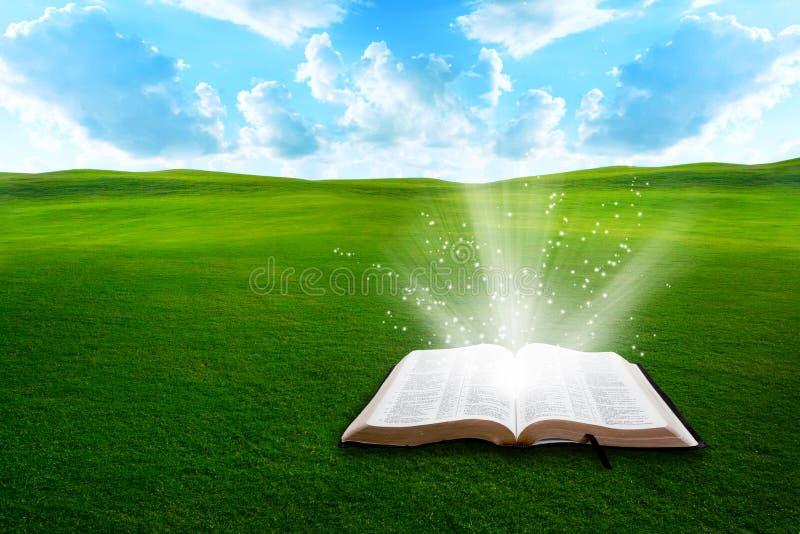 Bijbel op grasrijk gebied stock afbeeldingen
