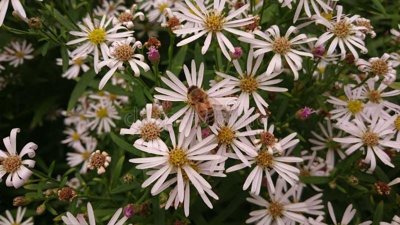 Bijen, Botanisher Garten, Berlijn royalty-vrije stock afbeelding