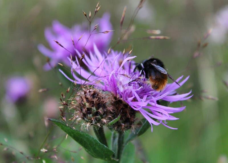 Bijen in de val royalty-vrije stock fotografie