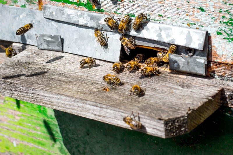 Bijen dichtbij bijenkorf De oude bijenkorf in apiary_ stock fotografie