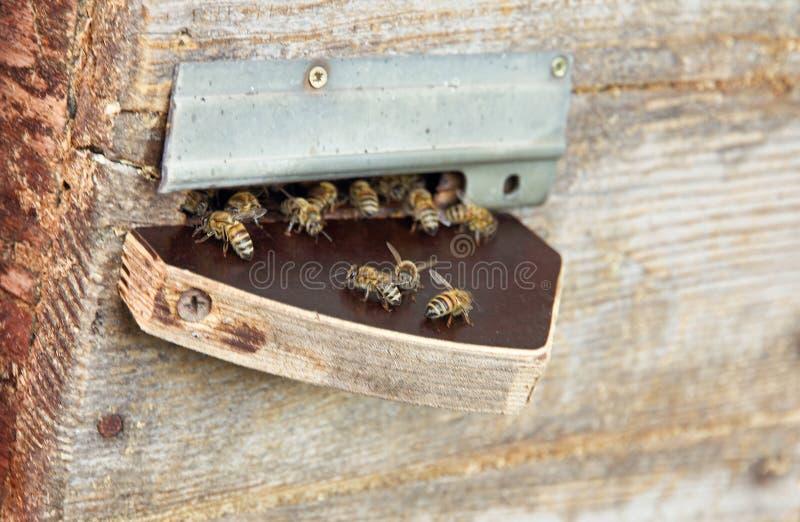 Bijen dichtbij bijenkorfpoort royalty-vrije stock foto