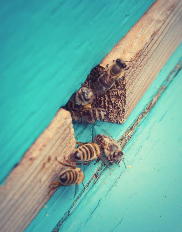Bijen dichtbij de bijenkorf royalty-vrije stock foto