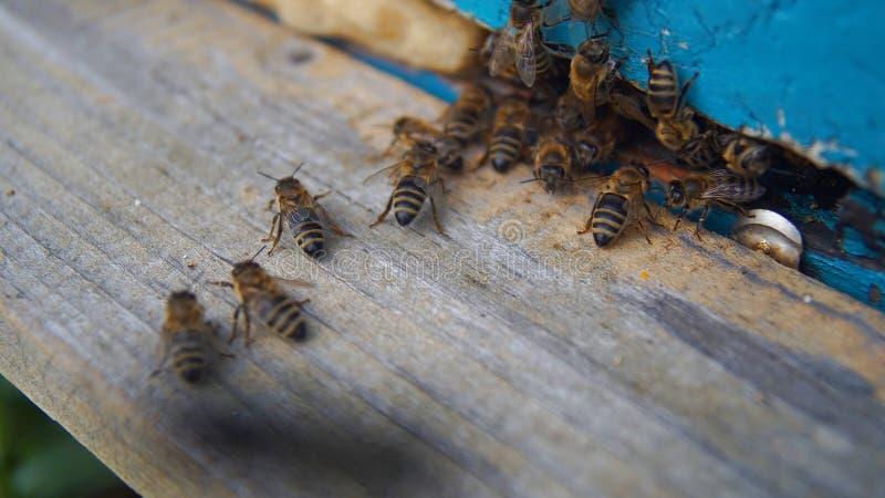 Bijen die de bijenkorf na een dag van het werk willen ingaan royalty-vrije stock fotografie