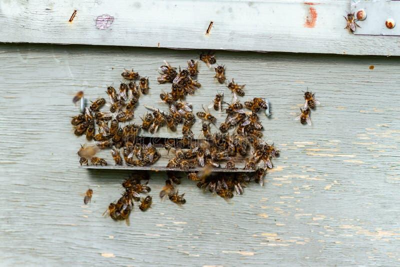 Bijen die de kunstmatige bijenkorf ingaan royalty-vrije stock foto's
