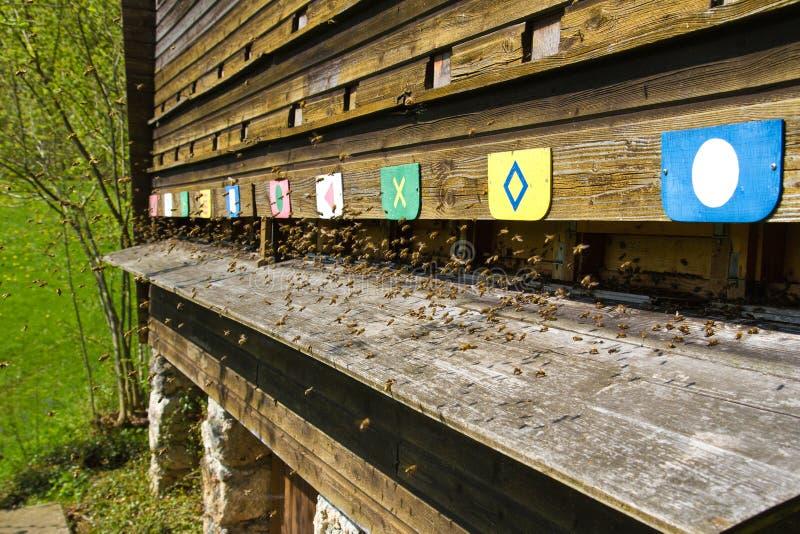 Bijen die in een bijenkorf vliegen royalty-vrije stock afbeelding