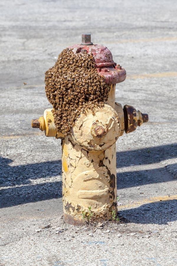 Bijen die op de grungy stadsbrandkraan, de noodsituatie en saf zwermen royalty-vrije stock afbeeldingen