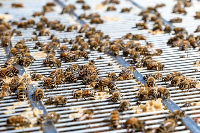 Bijen hangin uit op hoogste a van een ruimte van de seperatorhoning van het metaalkader van een bijenkorf royalty-vrije stock afbeelding