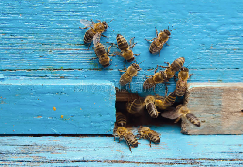 Bijen met honing stock afbeeldingen