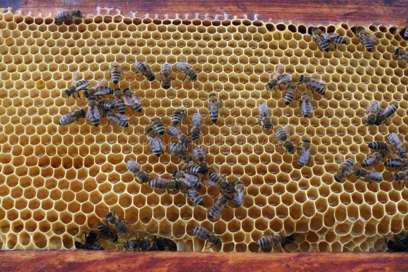 Bijen op een Honingraat stock fotografie