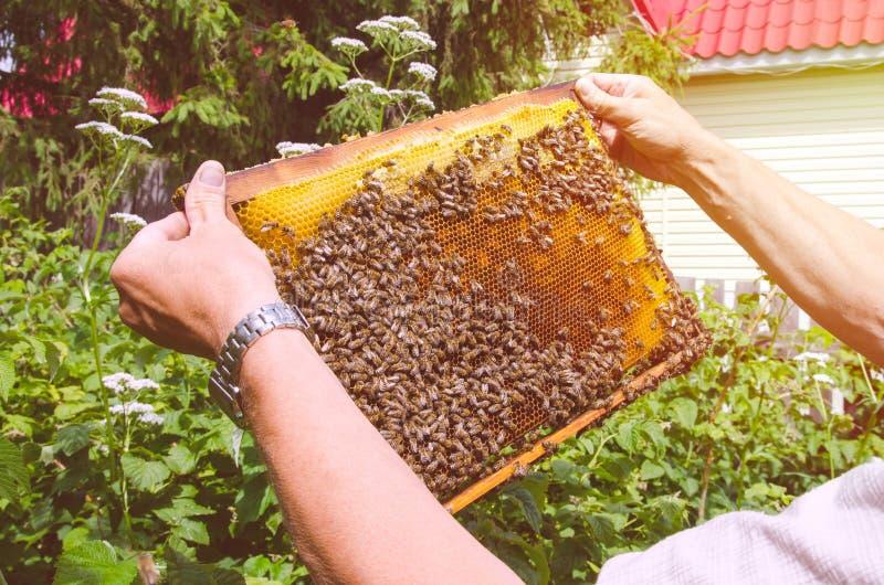 Bijen op een zonnig kader, royalty-vrije stock afbeelding