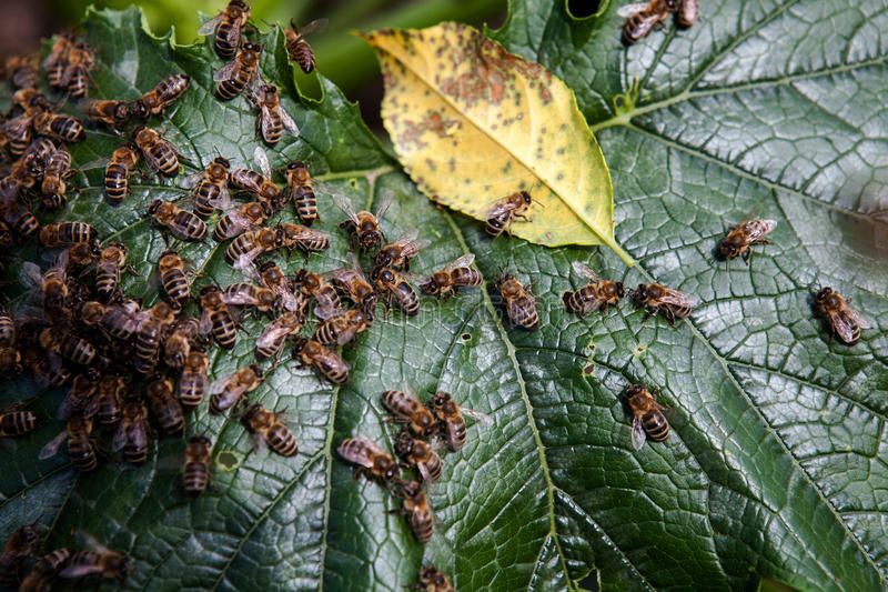 Bijenfamilie stock afbeelding