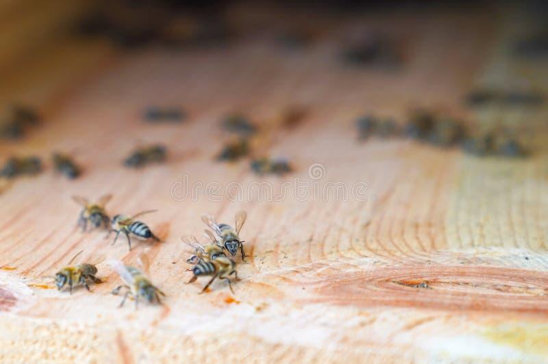 Bijengang rond op oppervlakte van muur van bijenkorf, selectieve nadruk stock foto's