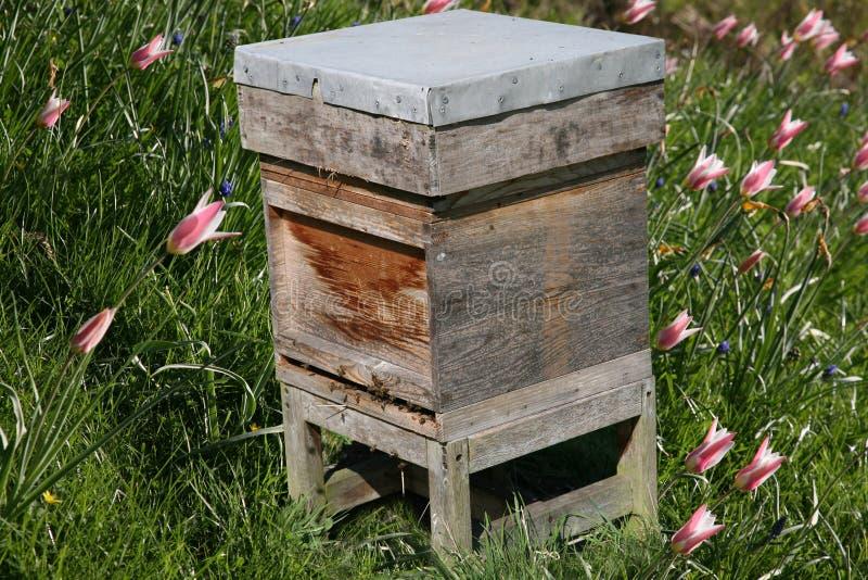 Bijenkorf stock afbeelding