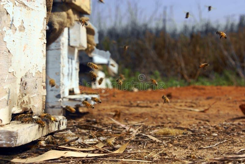 Bijenkorf stock afbeeldingen