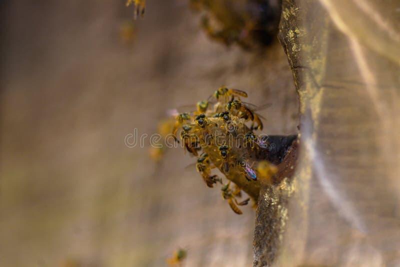 Bijenkorf jataà stock afbeelding