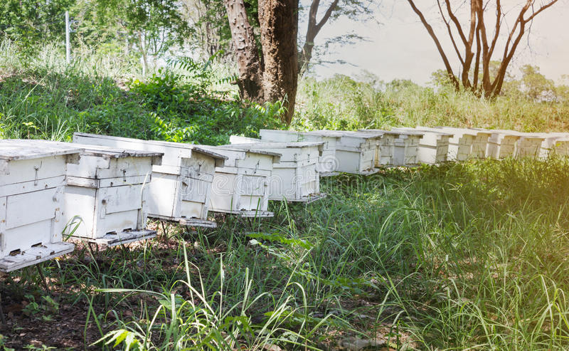 Bijenkorfdoos in bijenlandbouwbedrijf, houten doos voor bijennest, bijenlandbouwbedrijf stock afbeeldingen