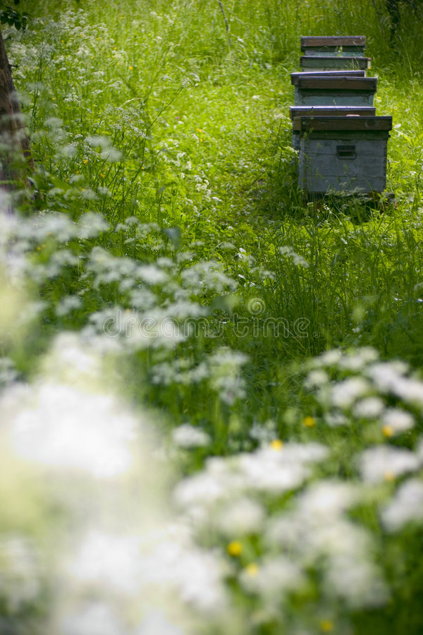 Bijenkorven in de tuin stock afbeelding