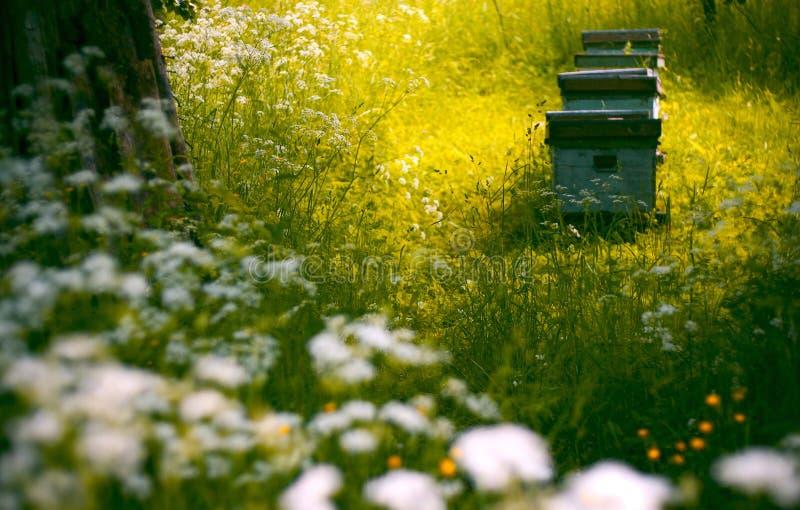 Bijenkorven in de tuin royalty-vrije stock foto's