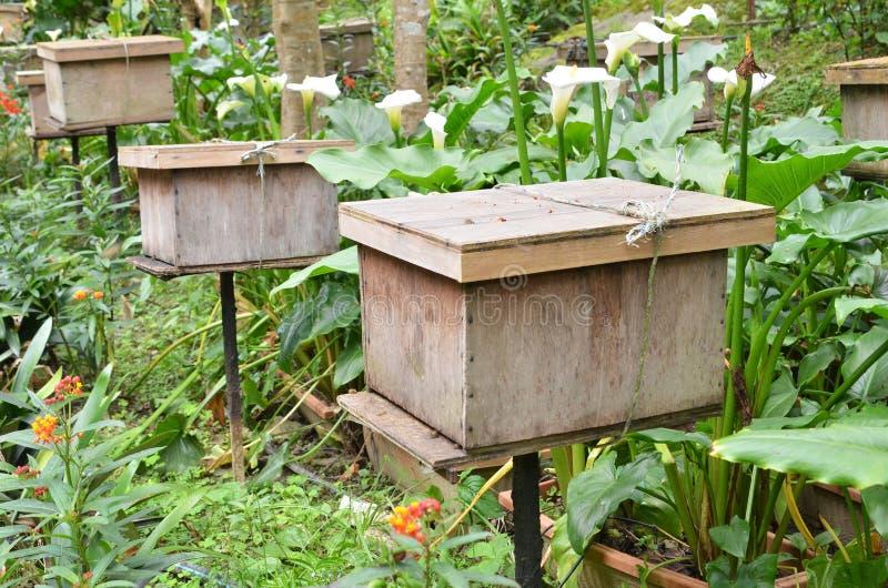 Bijenlandbouwbedrijven die in Cameron Highlands worden gevestigd royalty-vrije stock foto