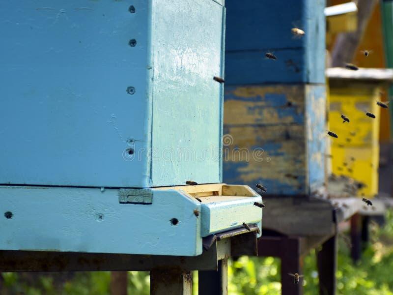 Bijenvlieg aan de bijenkorf imkerij Een zwerm van bijen brengt honingshuis apiary stock foto