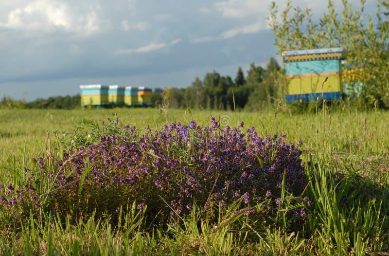 Bijenwerf stock afbeelding