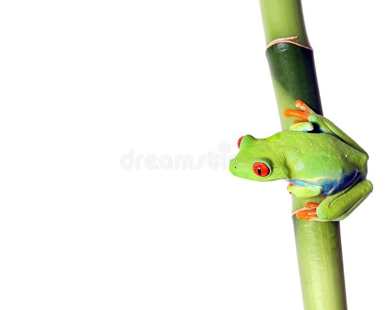 Bijou de la forêt humide image stock