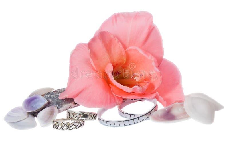 Bijouterie, flor e seashells da mulher isolados fotografia de stock