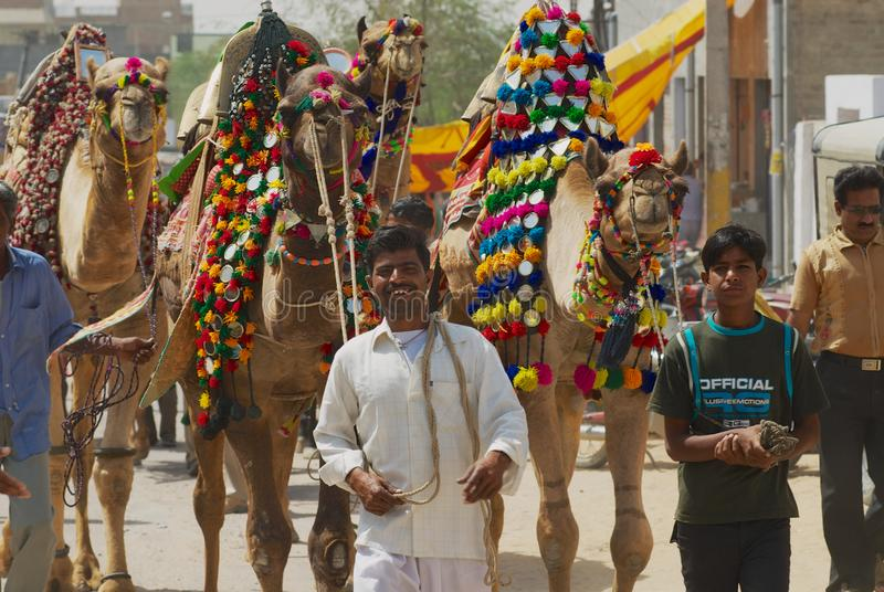 Men walk by the street with decorated camels during religious festival in Bikaner, India. Bikaner, India - April 01, 2007: Unidentified men .walk by the street royalty free stock photography