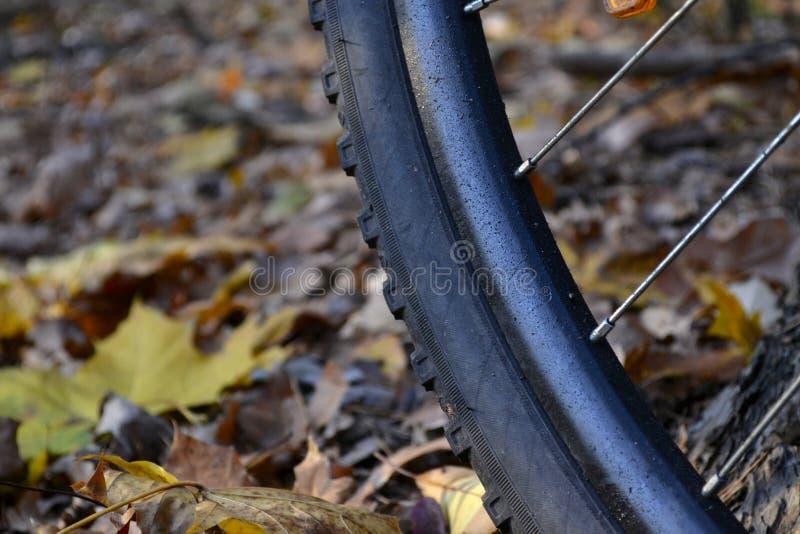 Bike e outono imagem de stock royalty free