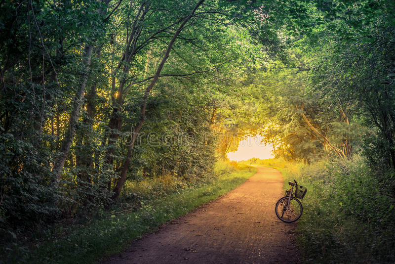 Bike on a forest trail stock photography